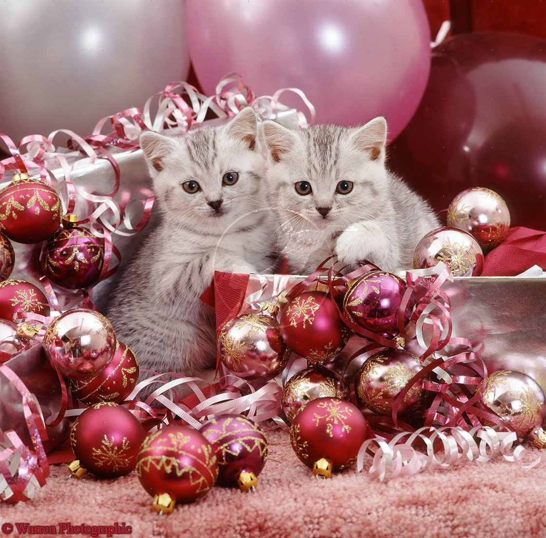 12 days of christmas kittens